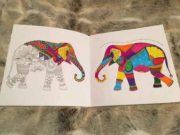 Animal Kingdom Colouring Book My